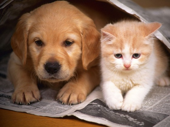 photos-of-cats-and-dogs-2-560x420